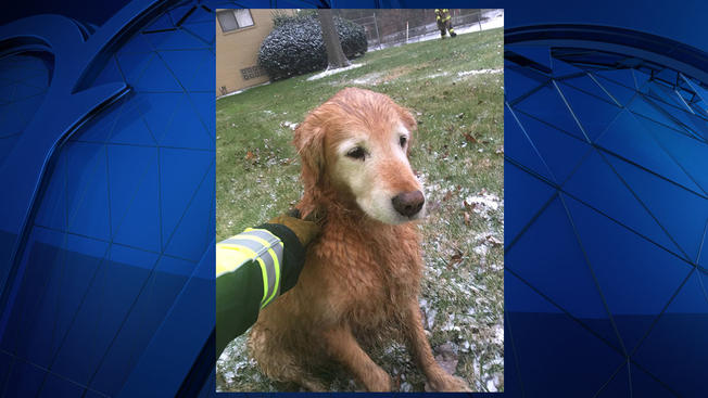 NBC4 rescued+dog3_658787