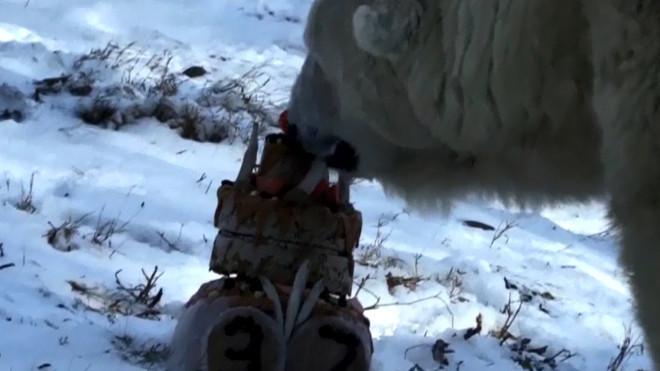polarbearbirthday_658783