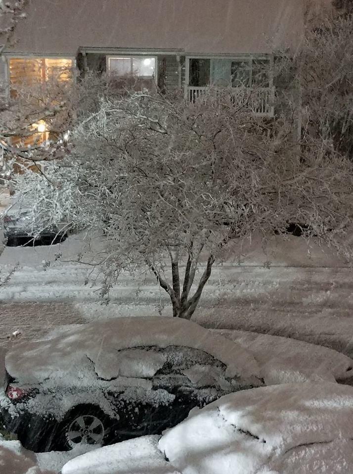 snow tree Suffolk_715365