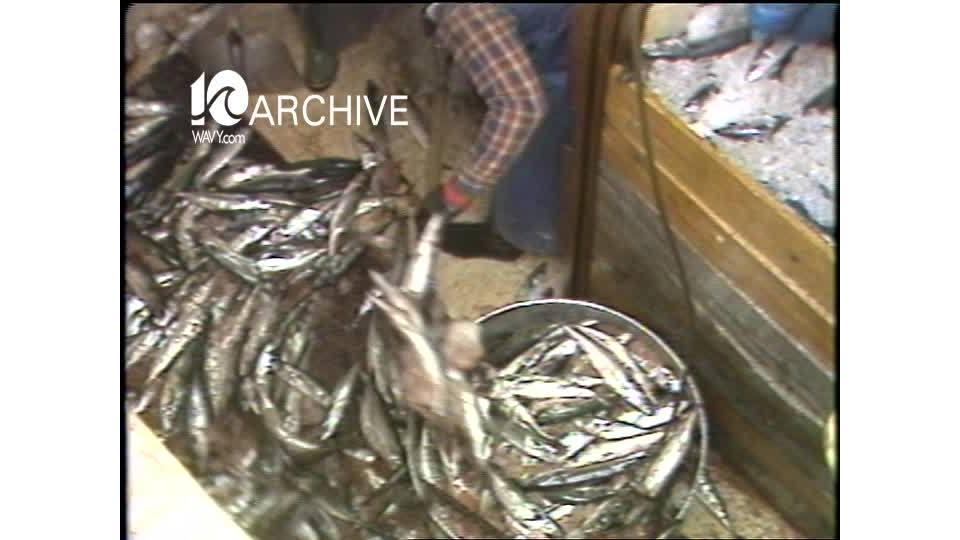 WAVY Archive: 1981 Tidewater Fishermen