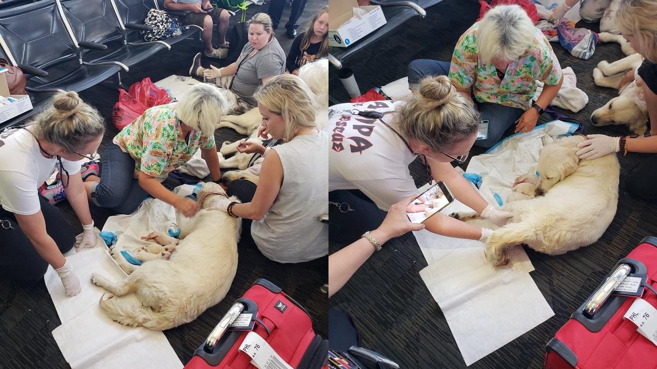airport puppies_1527269480292.jpg-846652698.jpg