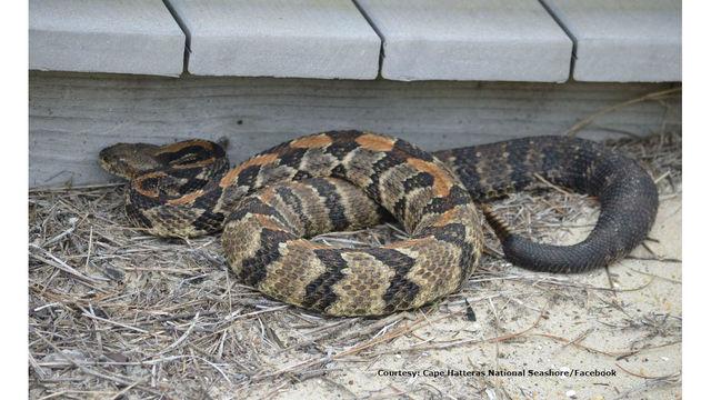 rattle snake park service outer banks