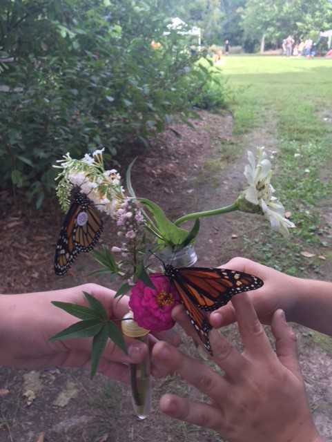 Norfolk Botanical Garden Monarch Tagging Jane Alvarez-Wertz_1537764894299.jpg.jpg