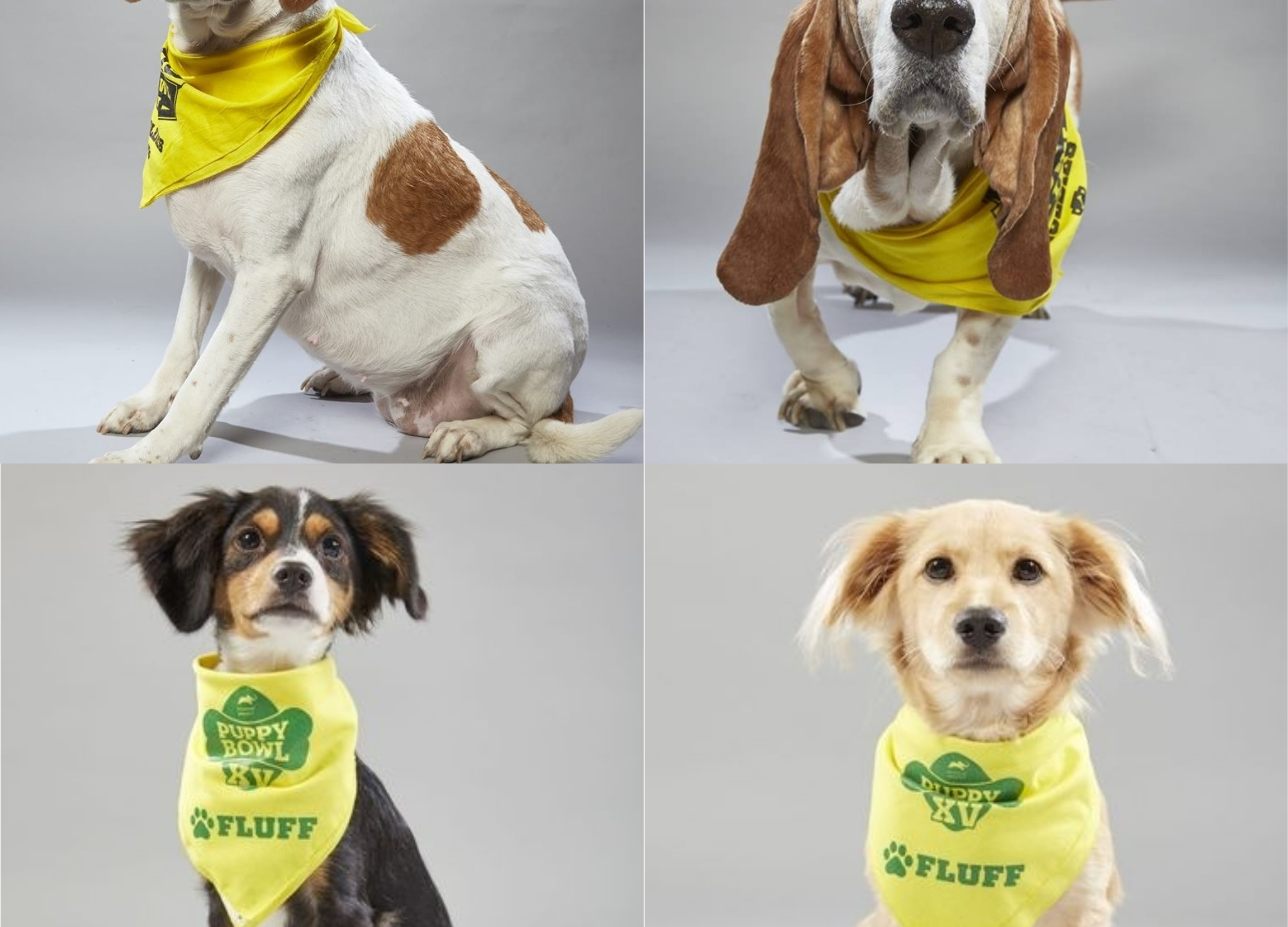 Norf SPCA VBSPCA Dog Puppy Bowl 2019_1548958914801.jpg.jpg