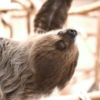 Mervin the sloth_1551454606565.jpg.jpg