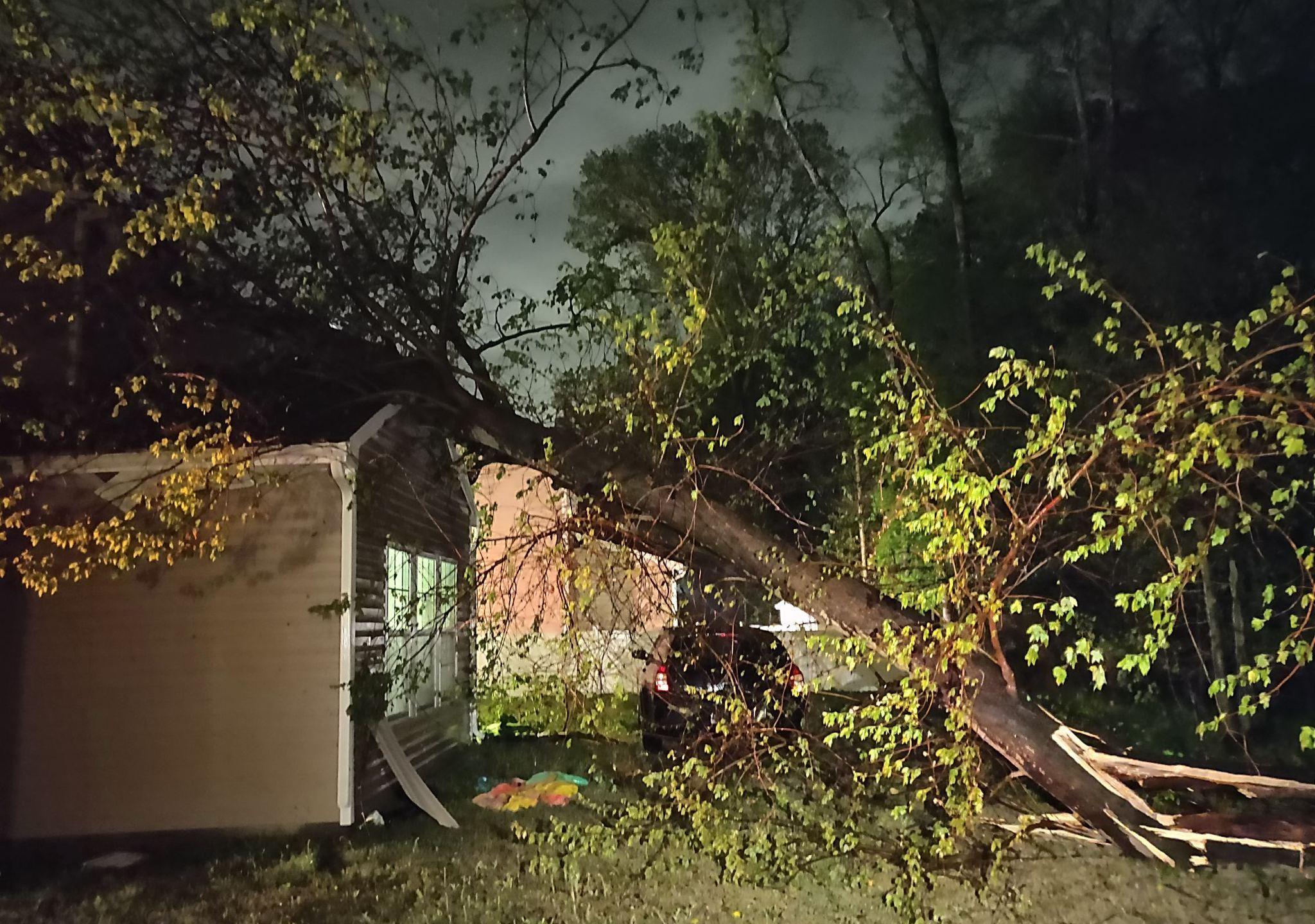NN Newman Rd tree damage, Kiahnna Patterson3_1555320007591.jpeg.jpg
