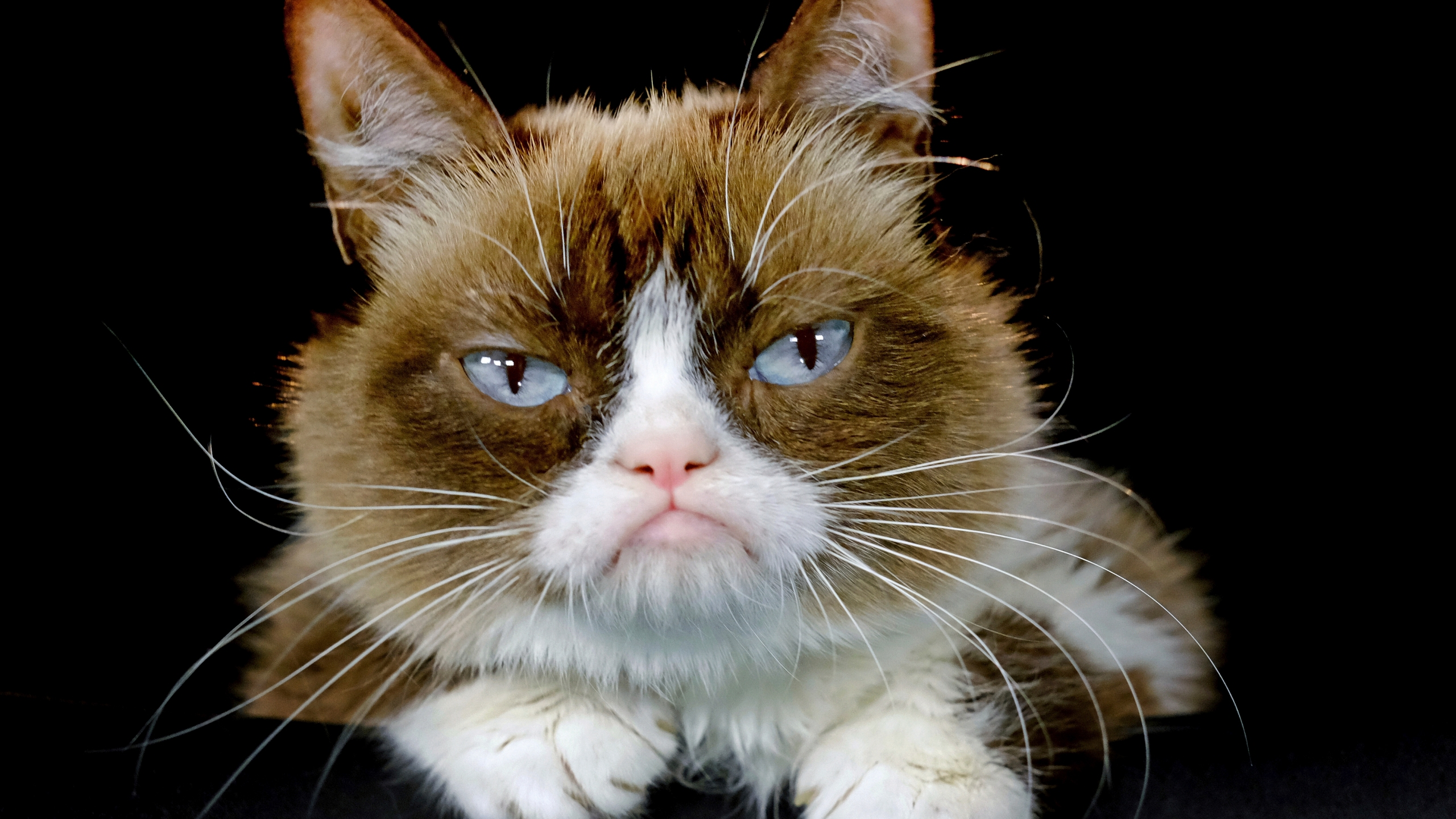 Grumpy_Cat_Death_23718-159532.jpg13697697
