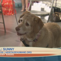 Pet_Pal_of_the_Week__Sunny_9_20190502145741