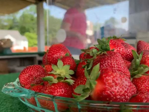 Pungo Strawberry Festival 2019