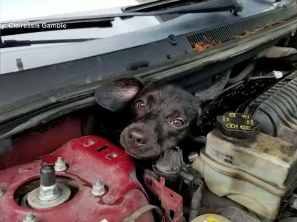 dog stuck in engine_1558379195044.jpg.jpg