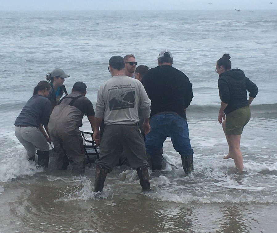 Hatteras Island: National Park Service Attempts To Save Stranded Dolphin On