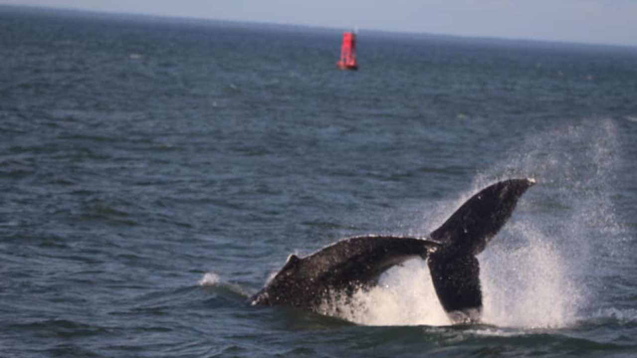 Whale Watching Off The Coast