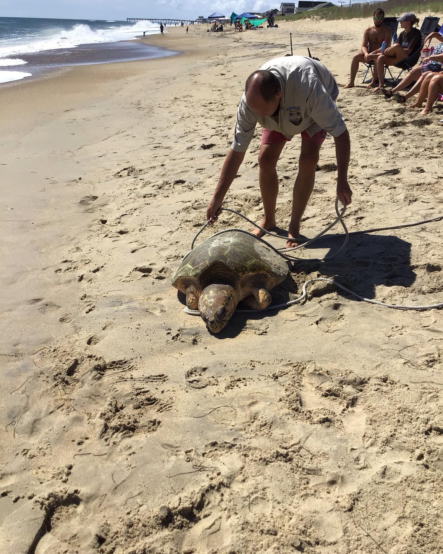 Dead Loggerhead Turtle Found On Kill Devil Hills Beach Wavy Com