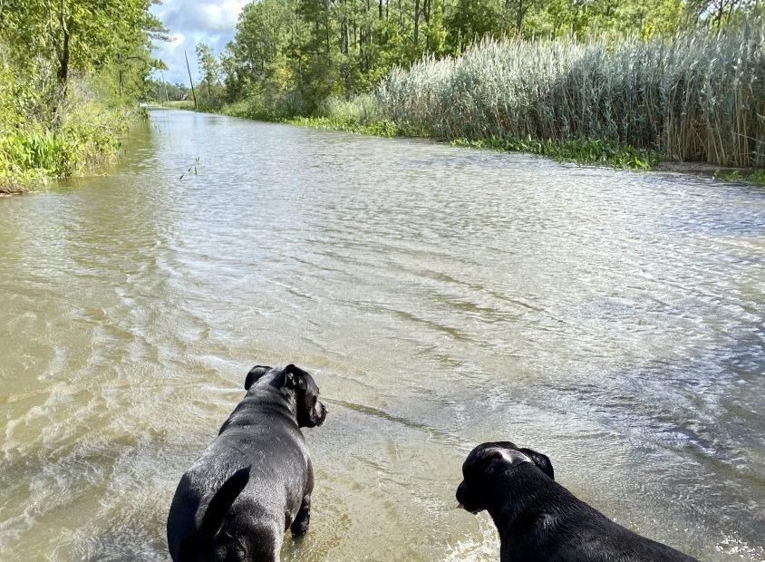 Muddy Creek Rd in Pungo Tammy e1596562226727 jpg?w=1280.'