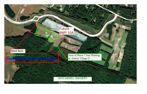Virginia Beach to plant 800 trees in flood prone Ashville Park neighborhood